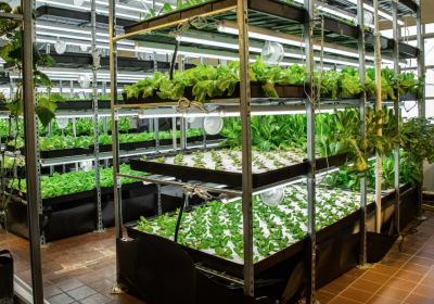 Article about Hydroponic Garden in the High School